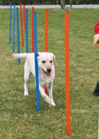 Dog Agility Weave Poles 115cm Tall with Ground Spike